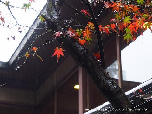 Miyajima #09