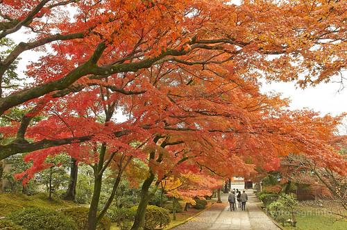 【写真】紅葉 : 養源院