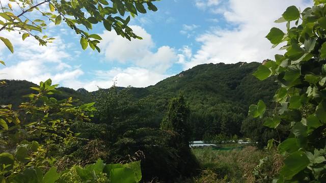 시골집 풍경 | 장바우