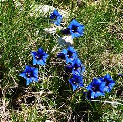 Primavera fiorita al Gran Sasso