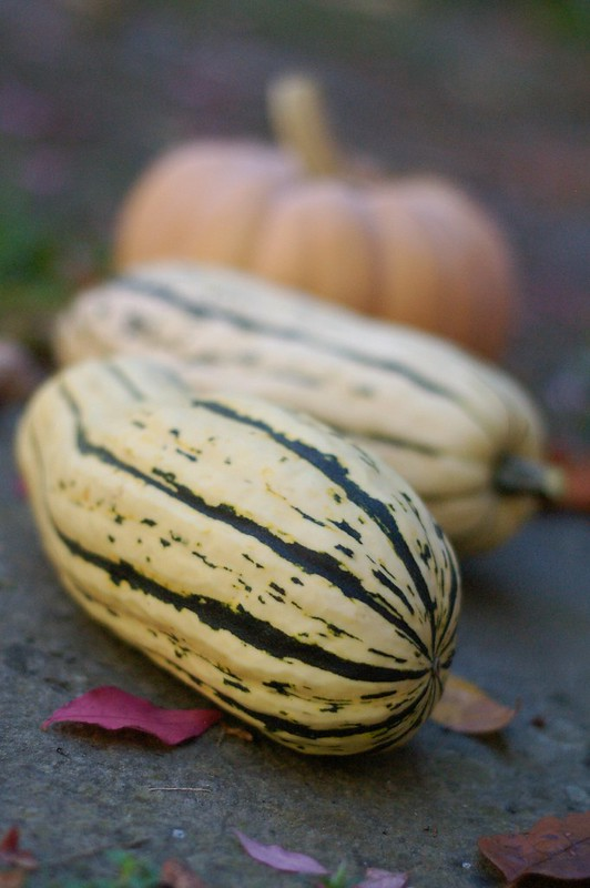 Delicata and Autumn Crown squashes by Eve Fox, The Garden of Eating, copyright 2014