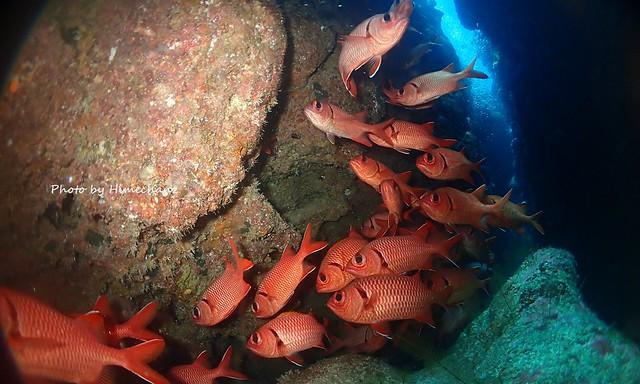 洞窟の中は魚がいっぱい!