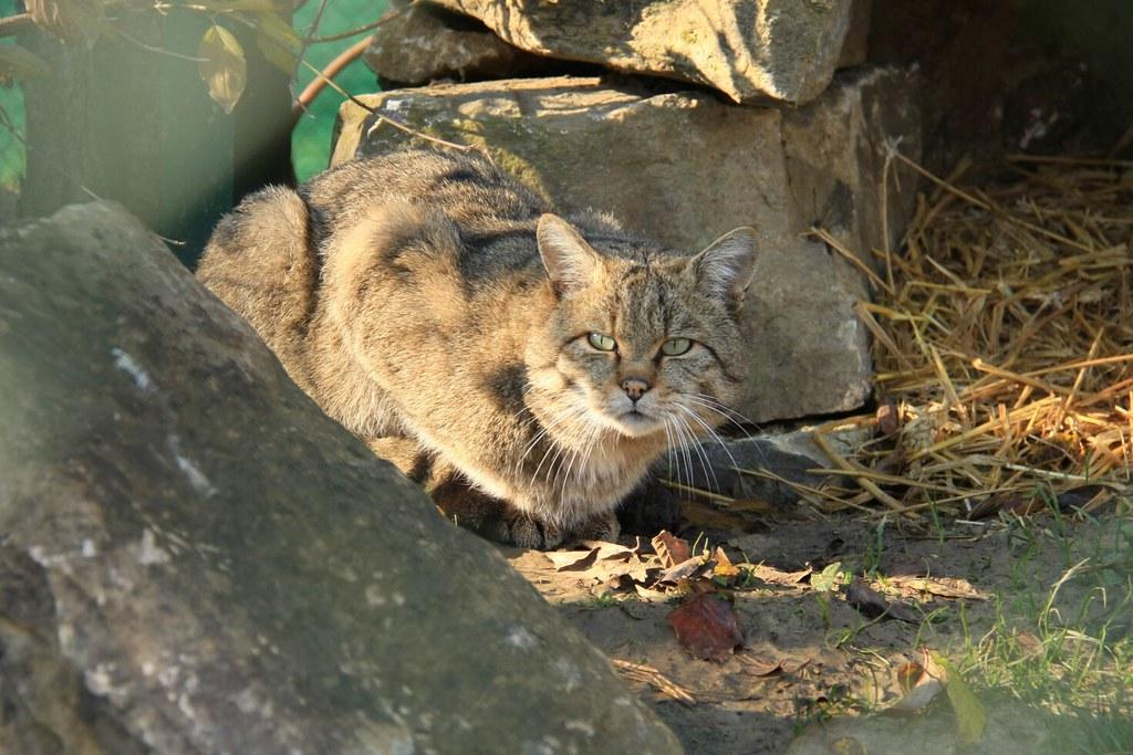 Wildkatzenpfad im Hainich am 01.11.2015