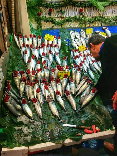 fresh fish gills