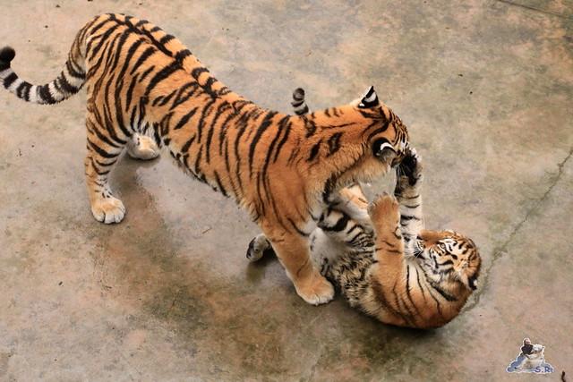 Tierpark Berlin 29.11.2015   50