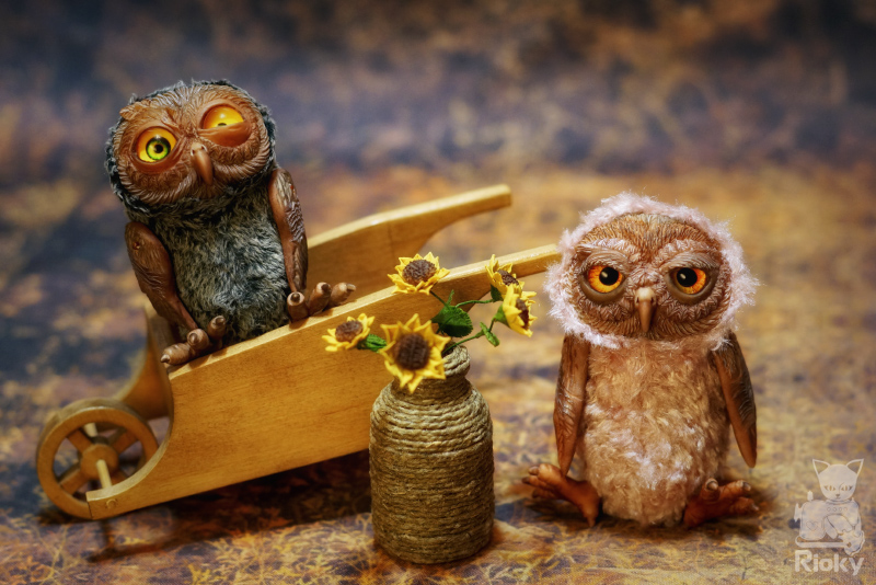 Two crazy little owls
