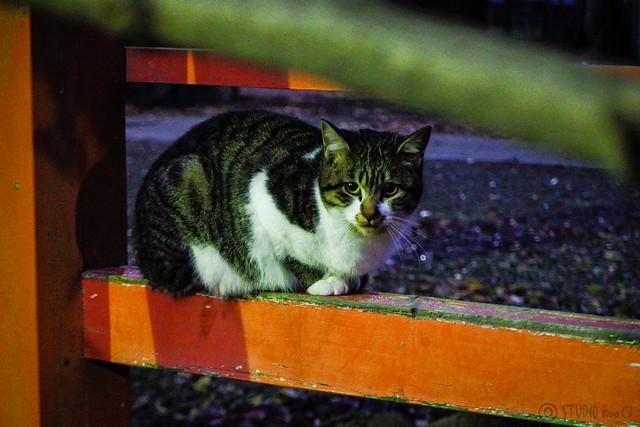 Today's Cat@2015-12-18