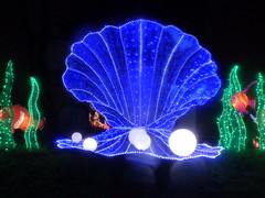 Magical Lantern Festival Birmingham - Birmingham Botanical Gardens, Edgbaston - fish - pearls in oyster