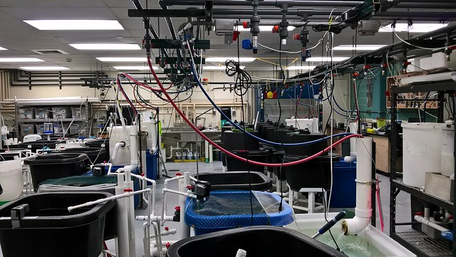 UWM School of Freshwater Sciences - Fish aquaculture lab