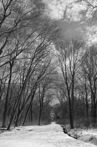 bw snow tree worldsend hingham trusteesofreservations blackandwhite monochrome pathscaminhos