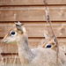 Chessington Zoo 29Aug15 by ╠Bea╣