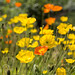 The Flowers of Lake Louise by Jill Clardy
