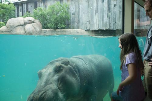 Howdy hippo.