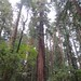 Henry-Cowell 2015-09-12