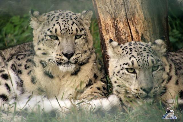 Tierpark Berlin 20.09.2015  0149