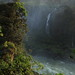 Forest at Iguazu Falls by Penelope W