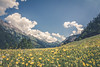 flower meadow in the Alps by Niklas W.