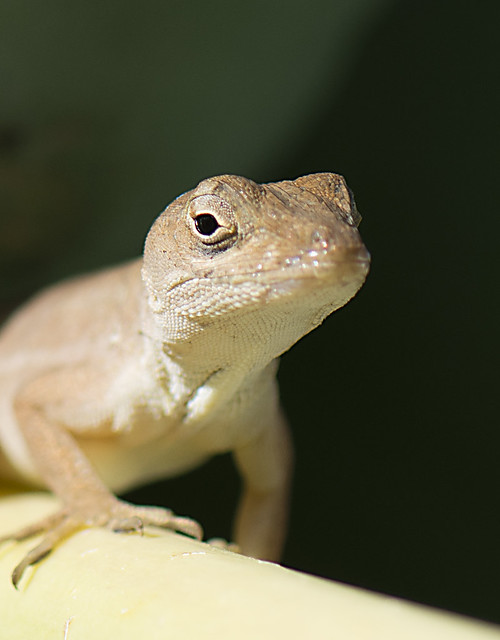 Lizard_0140