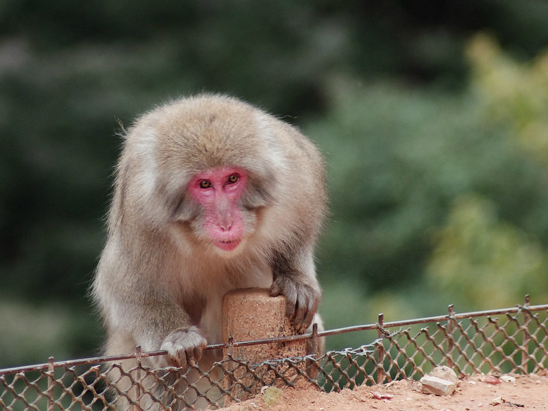 monkey-60
