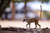 Meerkats of the Kalahari by Phemelo1