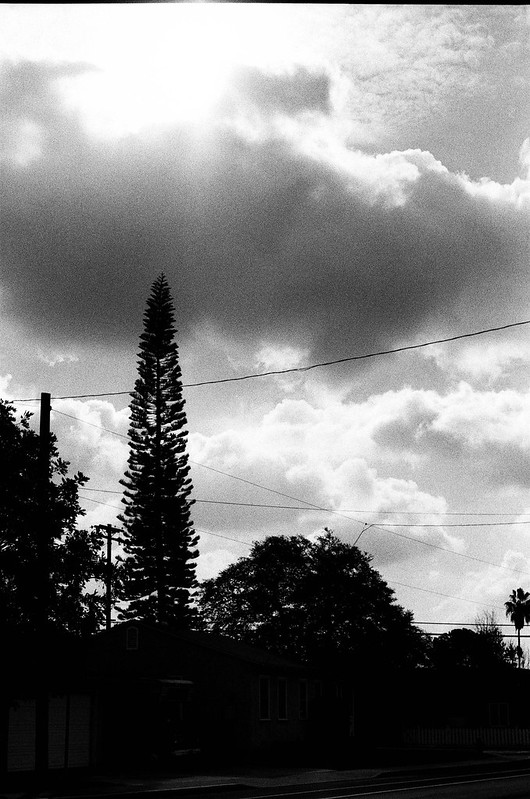Tree and Clouds, Rolando, San Diego