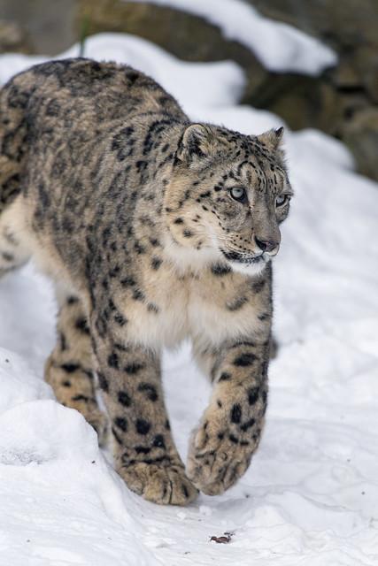 Djamila walking in the snow