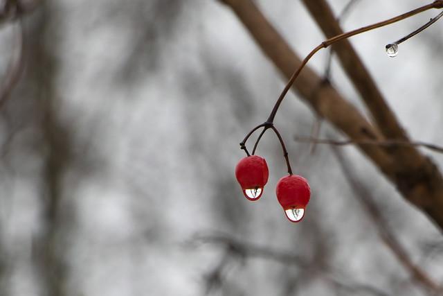 Winter Colour