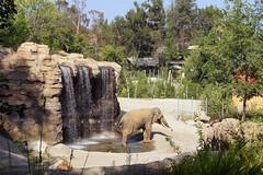 L.A. Zoo Elephant