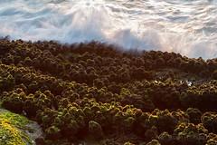 Tapalla Point - Dawn Shoreline