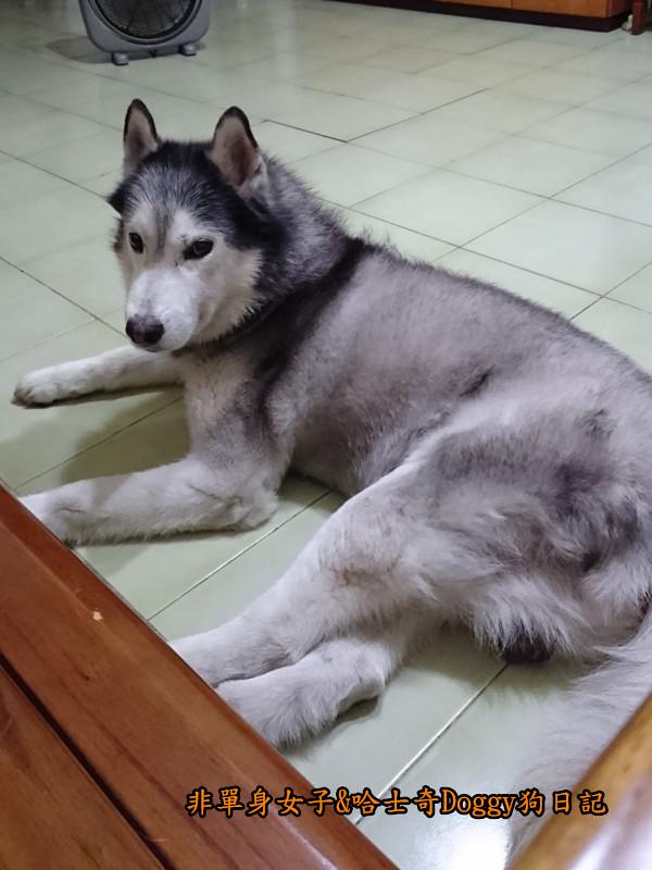 Doggy颱風08