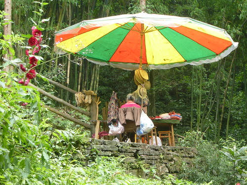CH-Emeishan-Wannian-Qingyin-sentier (5)