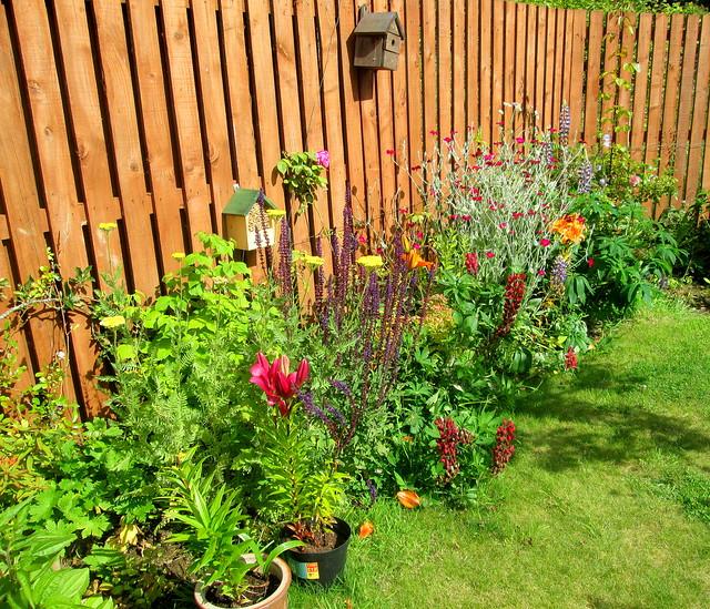 Katrina's garden
