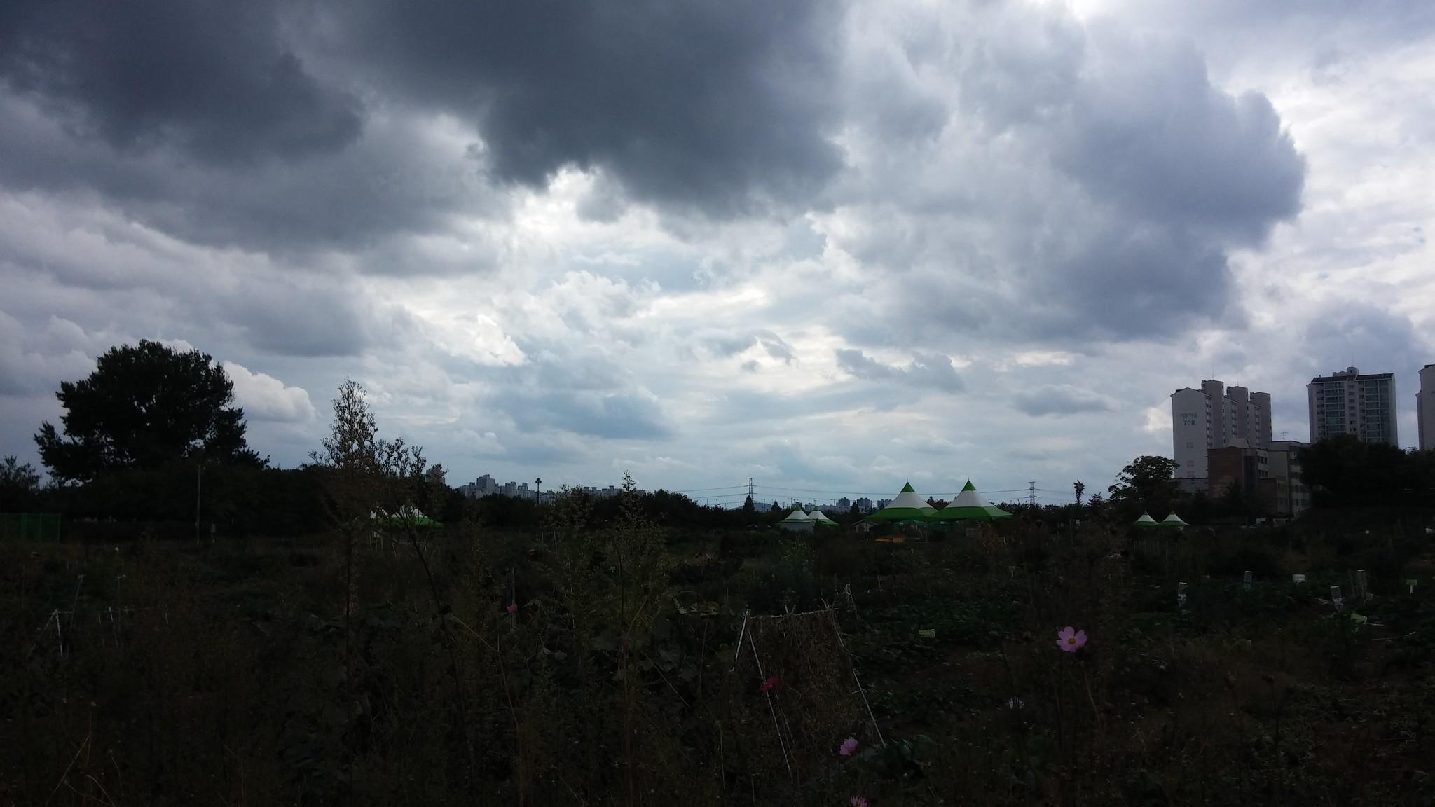 주말농장 | 구름이 예술이다