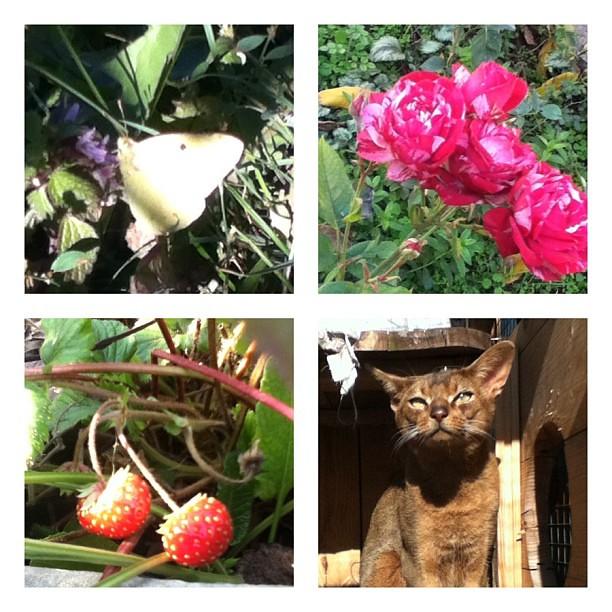 Вот такой ноябрь на с котом по душе! Чтобы клубника, бабочки, розы и солнце! #крым