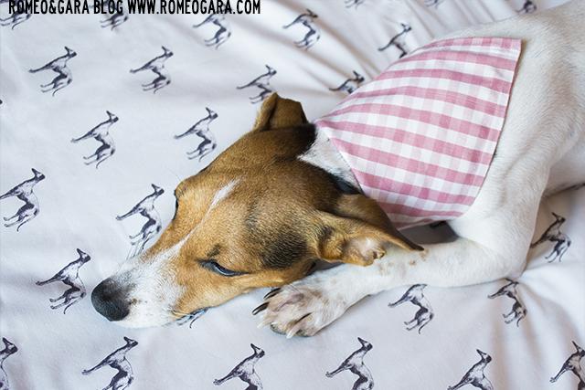 Pañuelo para perros