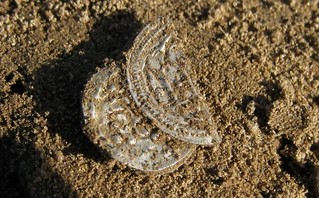 Viking coin Harald Bluetooth