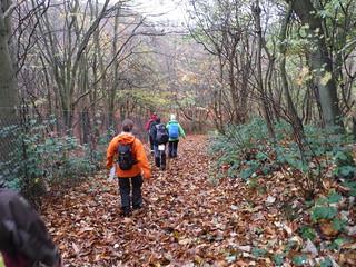 Undulating Route up to the Greensand Ridge