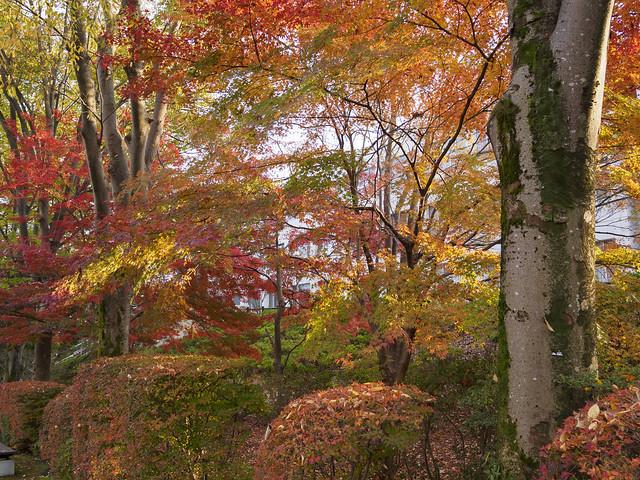 Autumn brocade 2015