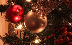 Christmas/holiday 2016