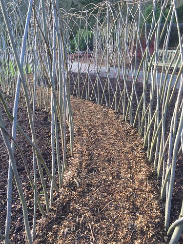 Willow Path at RHS Harlow Carr