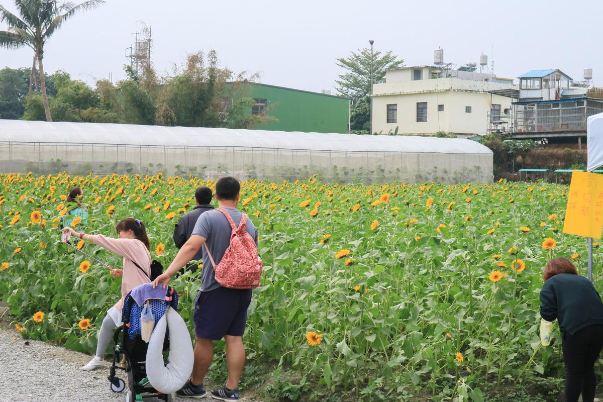 屏東農業博覽會-10