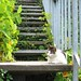 Filbert Steps, San Francisco (May 2006)