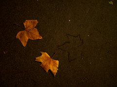 memory of a dead leaf
