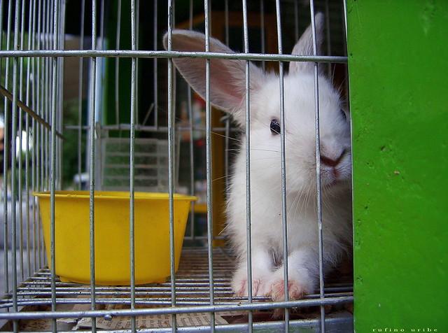 Clasificado 2:  conejo busca dama con zanahoria