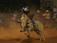 western riding(0.0), equestrian sport(0.0), charreada(0.0), barrel racing(0.0), animal sports(1.0), rodeo(1.0), event(1.0), sports(1.0), bull riding(1.0),