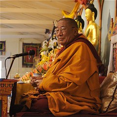 clergy, temple, religion, monk, lama, person,