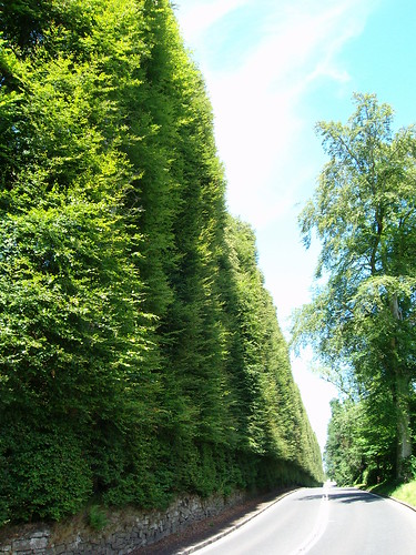 Beech Hedge, Perthshire