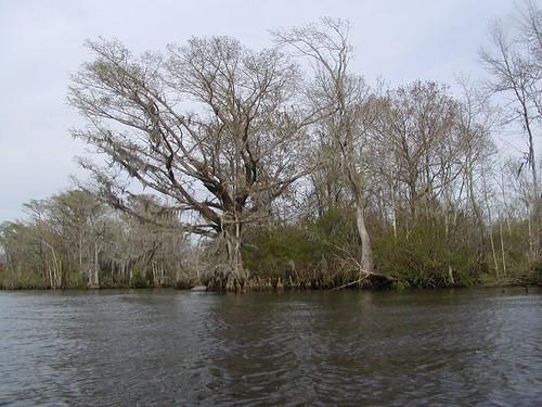 trees nature river geotagged kayak southcarolina cypress randomnature geo:tool=gmif waccamawriver geo:lat=33438031 geo:lon=79182758 random6