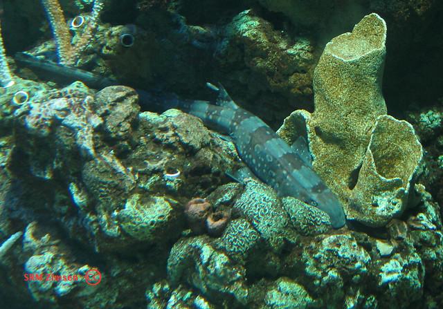 bamboo shark tank - photo #39