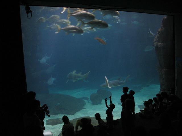 Aquarium Virginia Marine Science Museum Flickr Photo